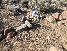 Dead Dog War Monument